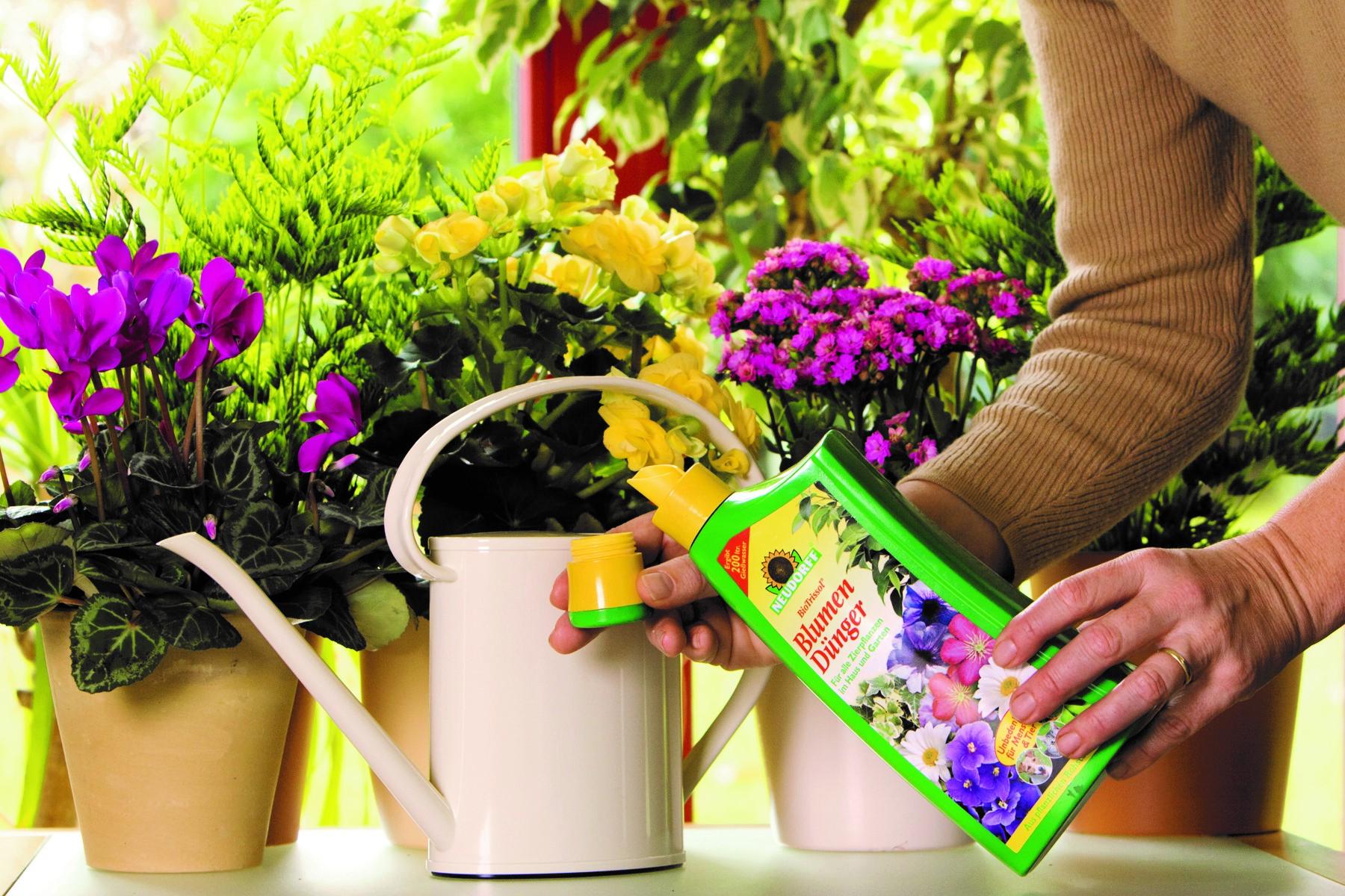 Сезонная подкормка комнатных растений