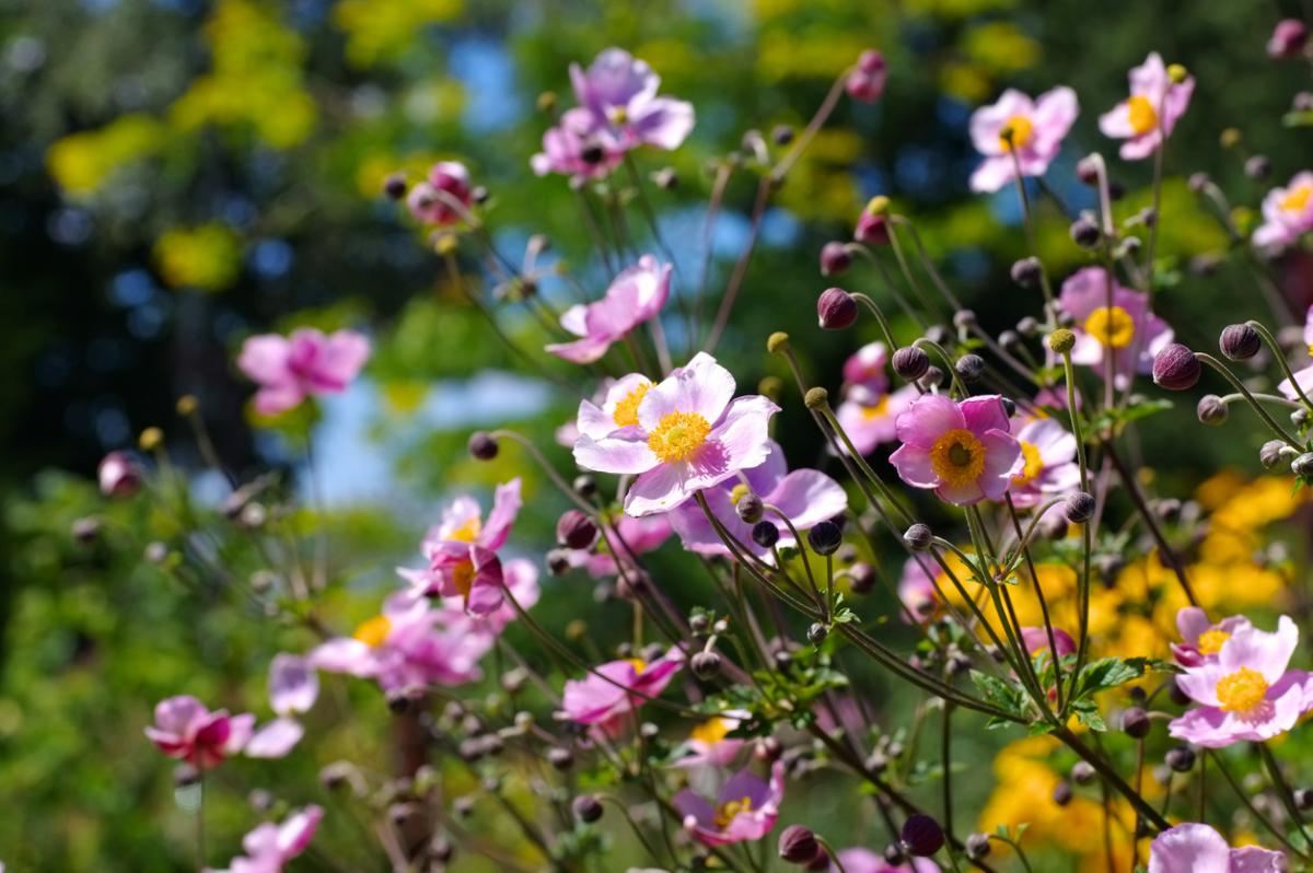 Многолетние цветы для дачи: красота без лишних хлопот (25 фото)