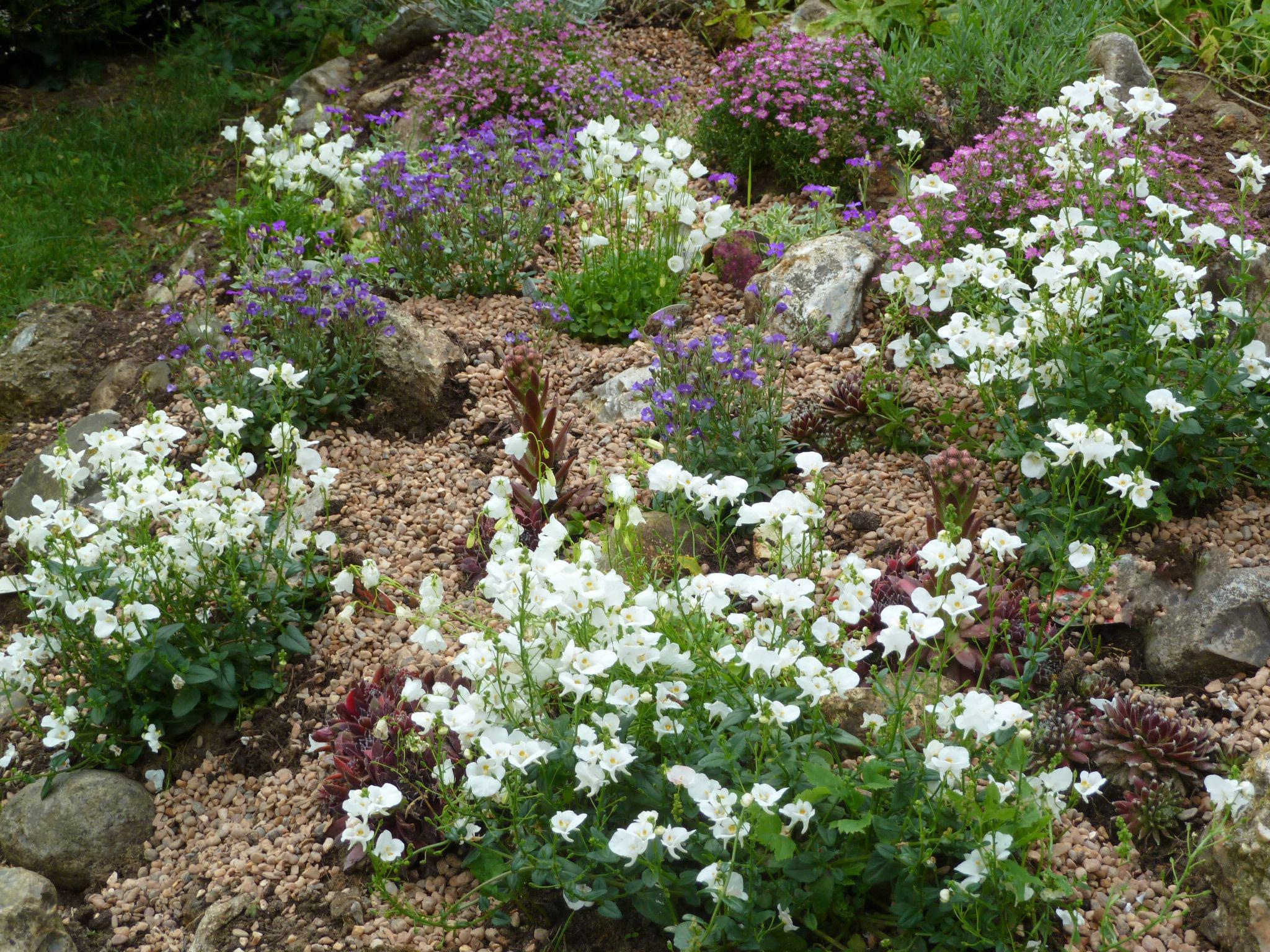 Рокарий с белыми цветами