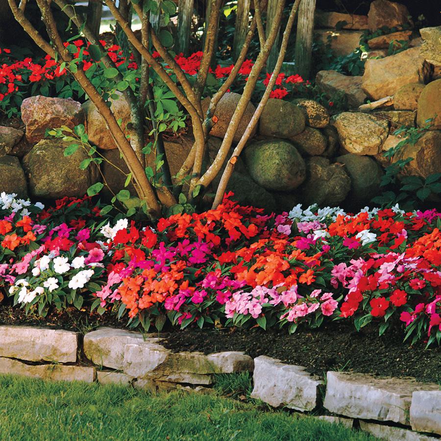 Бальзамин садовый в ландшафтном дизайне