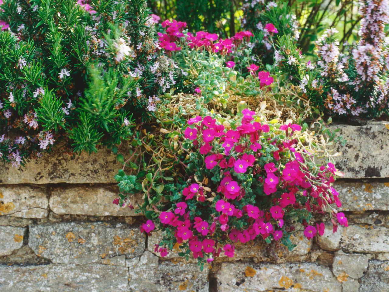 Рокарий с вьющимися растениями
