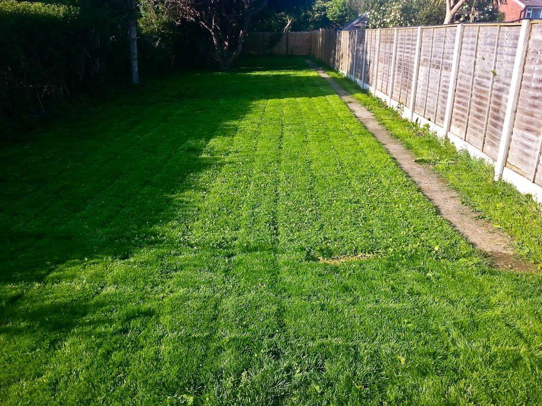 Рулонный газон во дворе дома