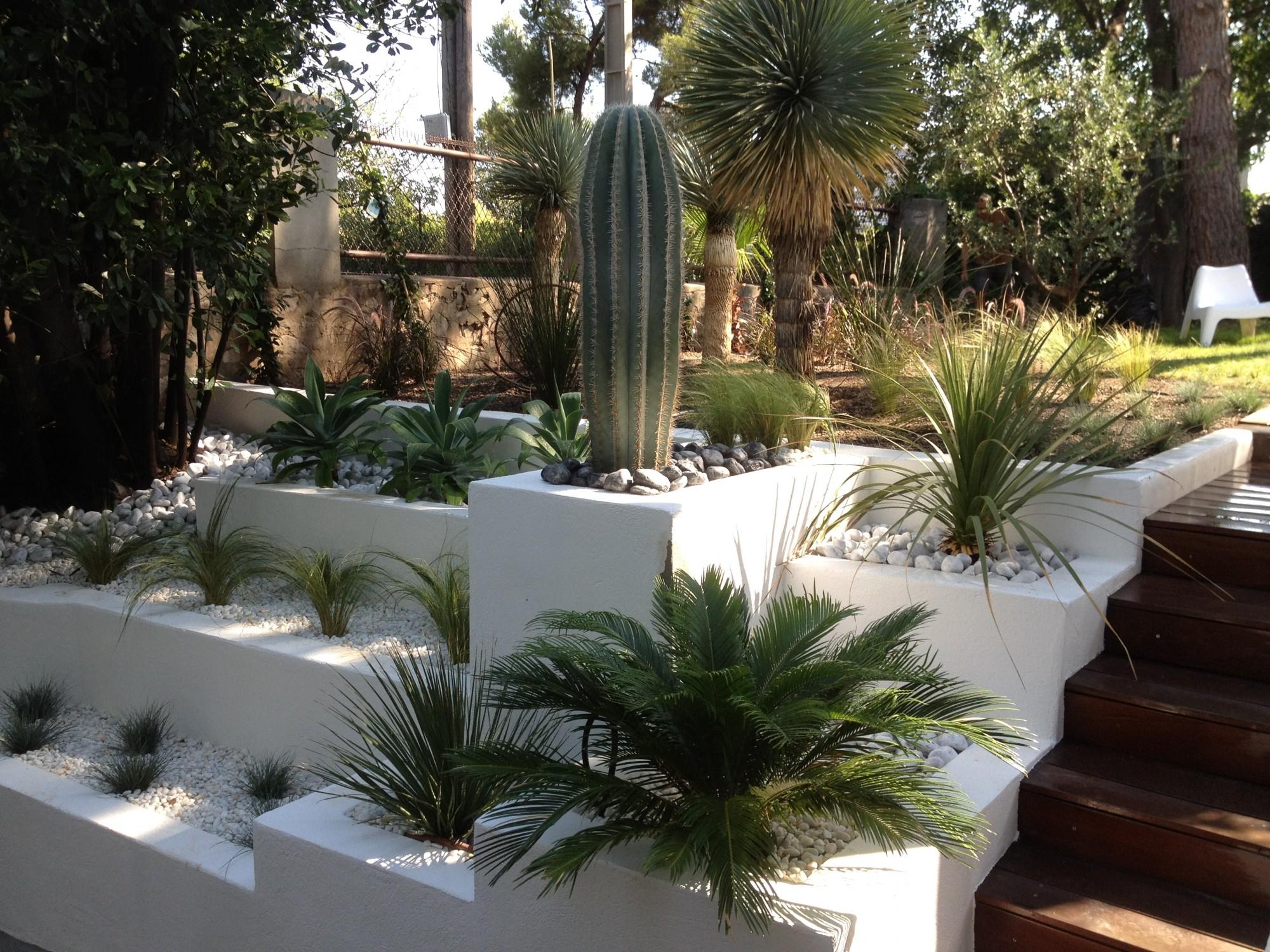 Ландшафтный дизайн участка с кактусом