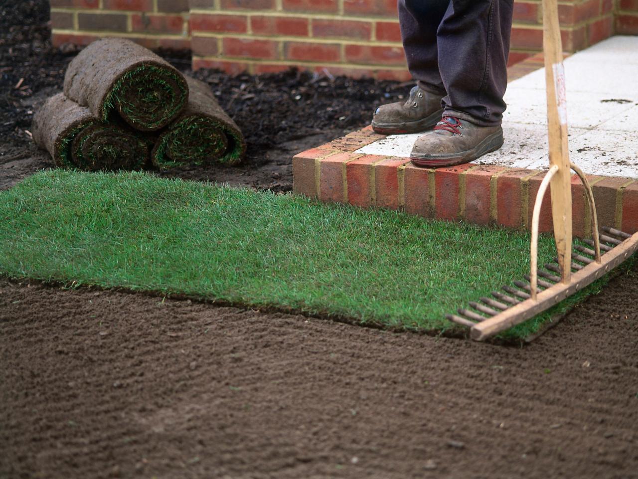 Рулонный газон: как сделать свой участок идеальным (20 фото)