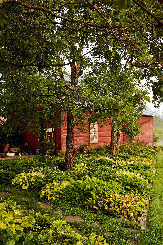 Ландшафтный дизайн сада с вечнозелеными растениями