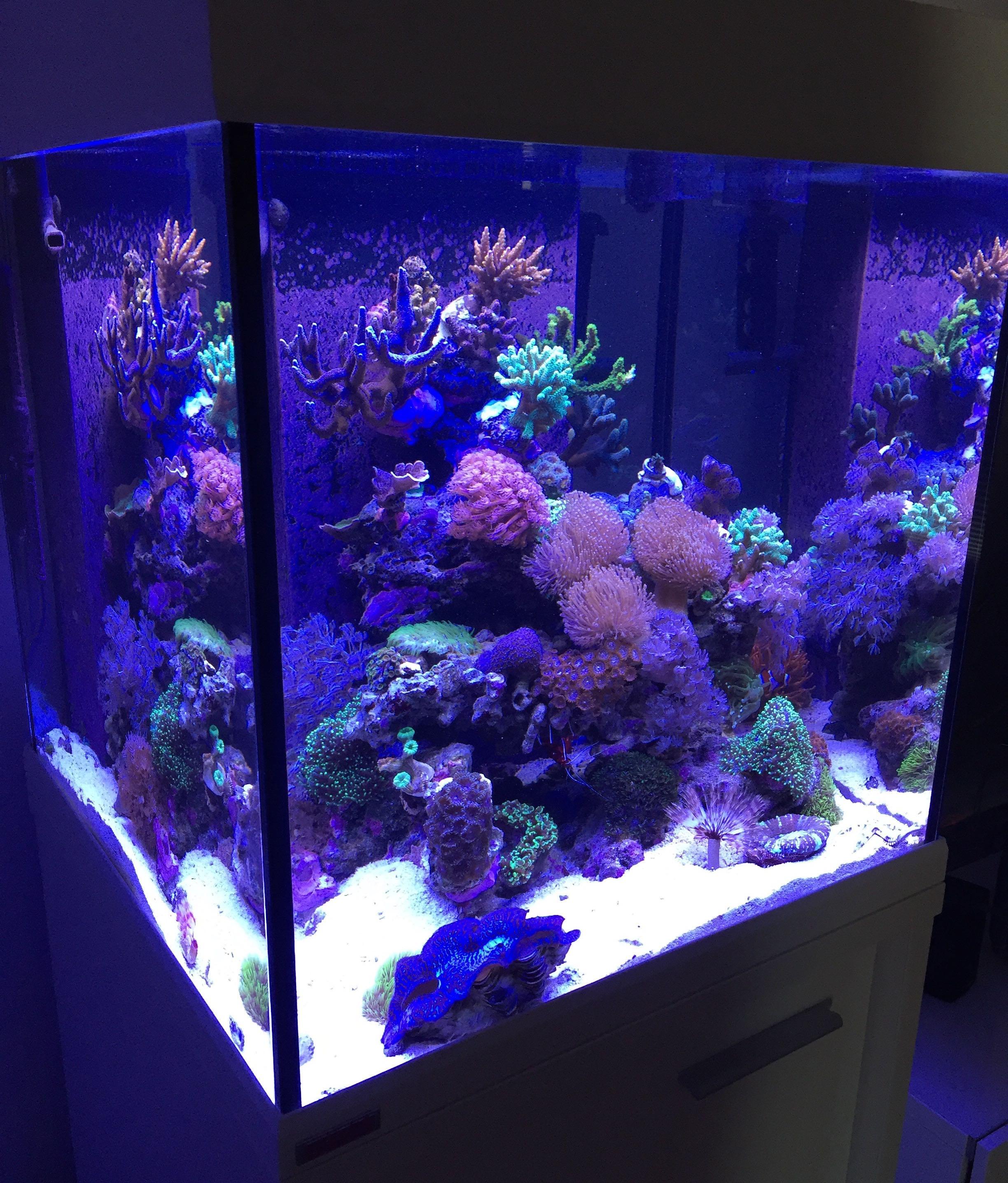 Аквариум своими руками с кораллами