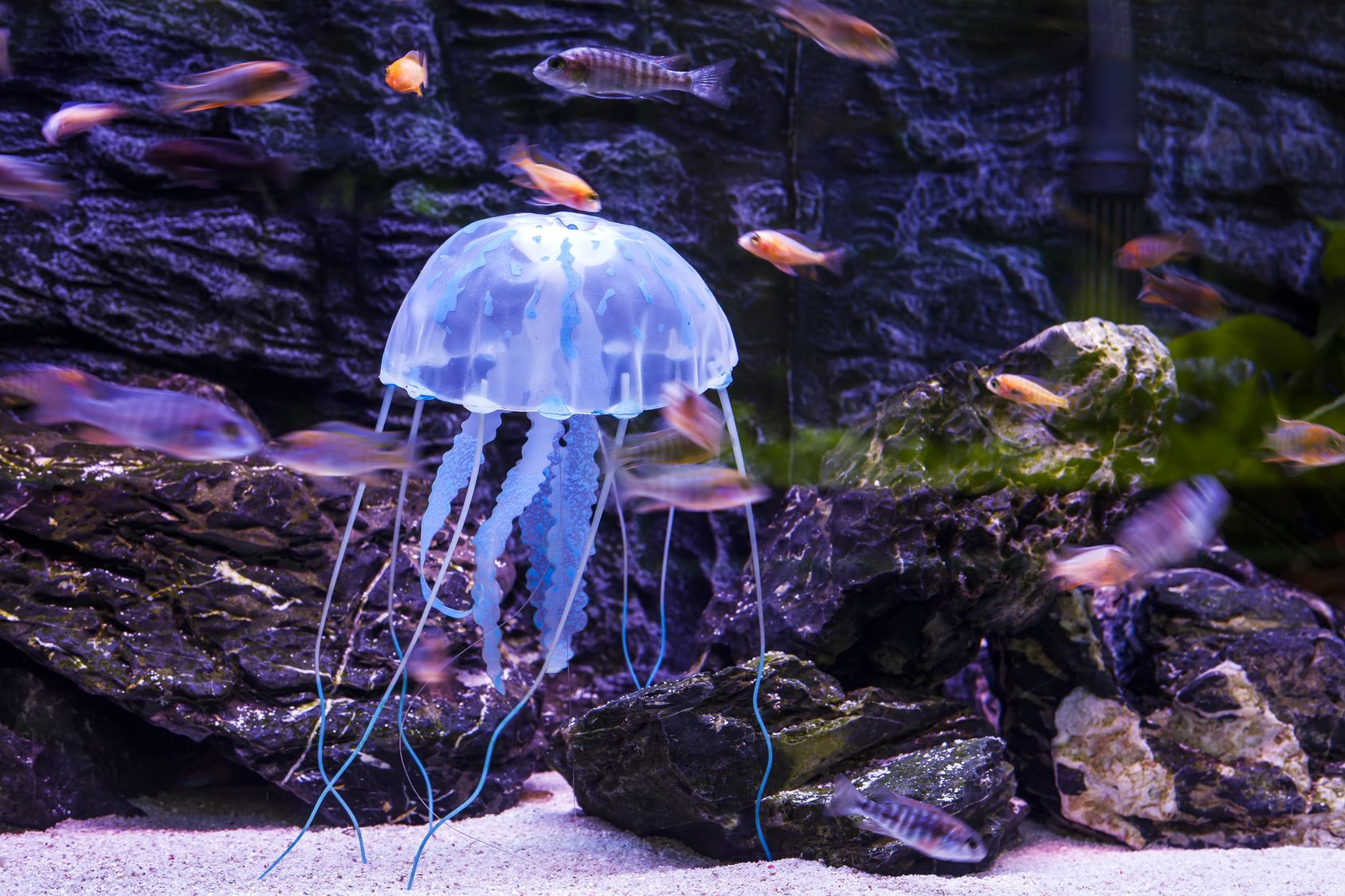 Аквариум своими руками с медузой