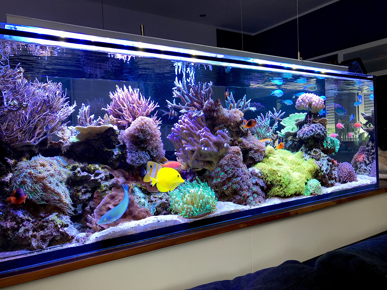 Аквариум своими руками морской
