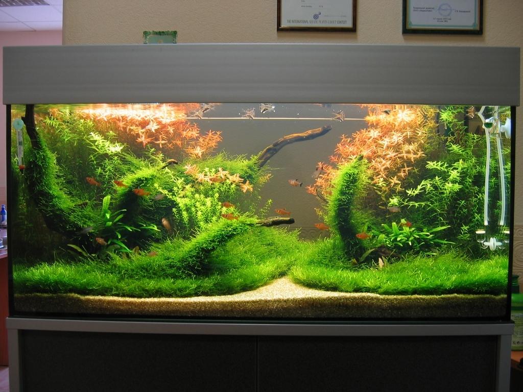 Аквариум своими руками с натуральной растительностью
