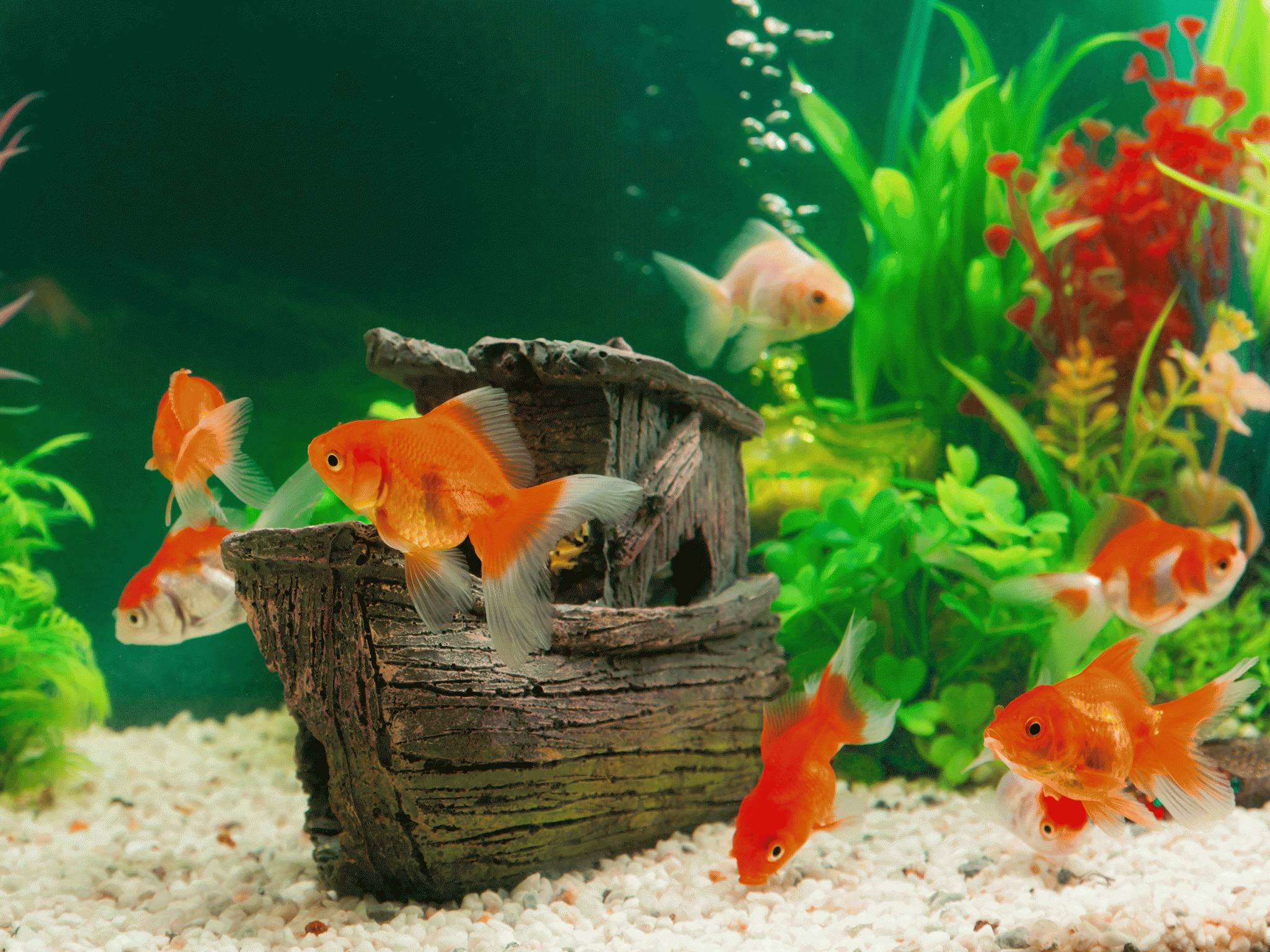 Аквариум своими руками с рыбками
