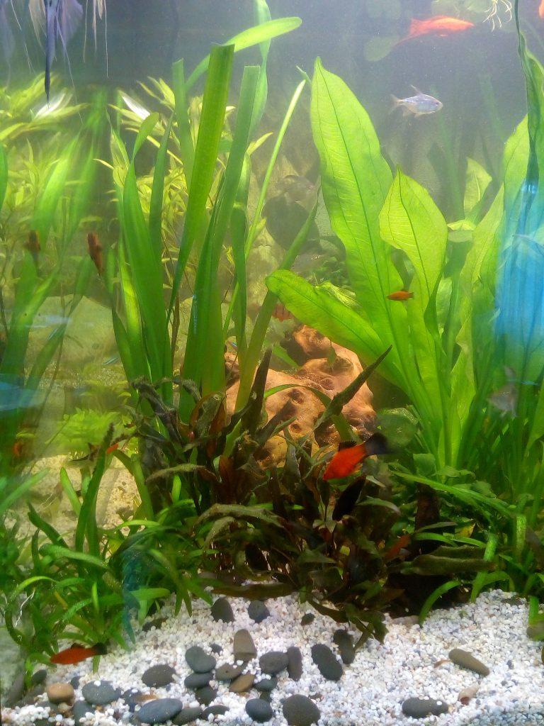 Аквариум своими руками с водорослями