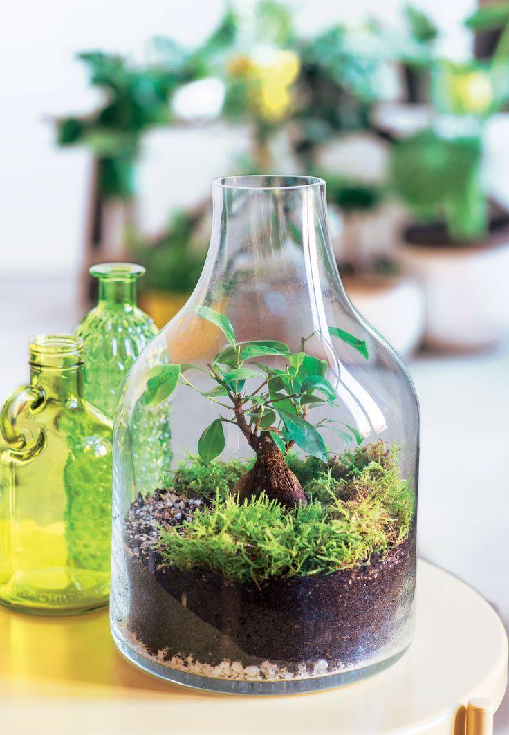Флорариум в бутылке
