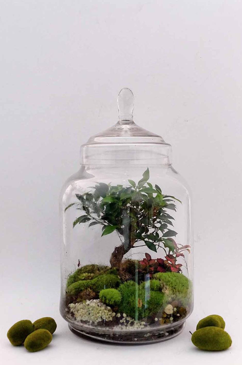 Флорариум с деревом
