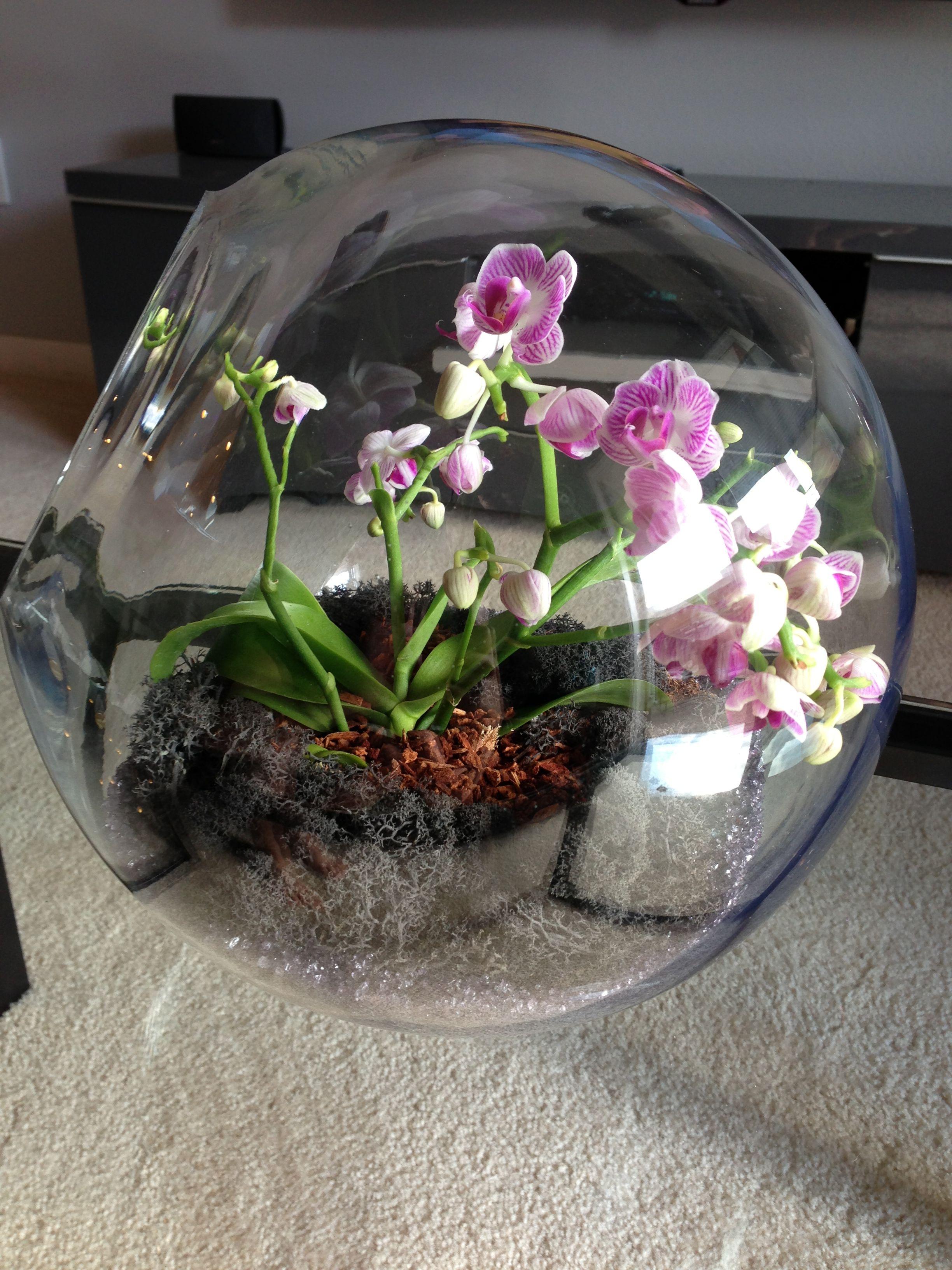 Флорариум с орхидеей стеклянный