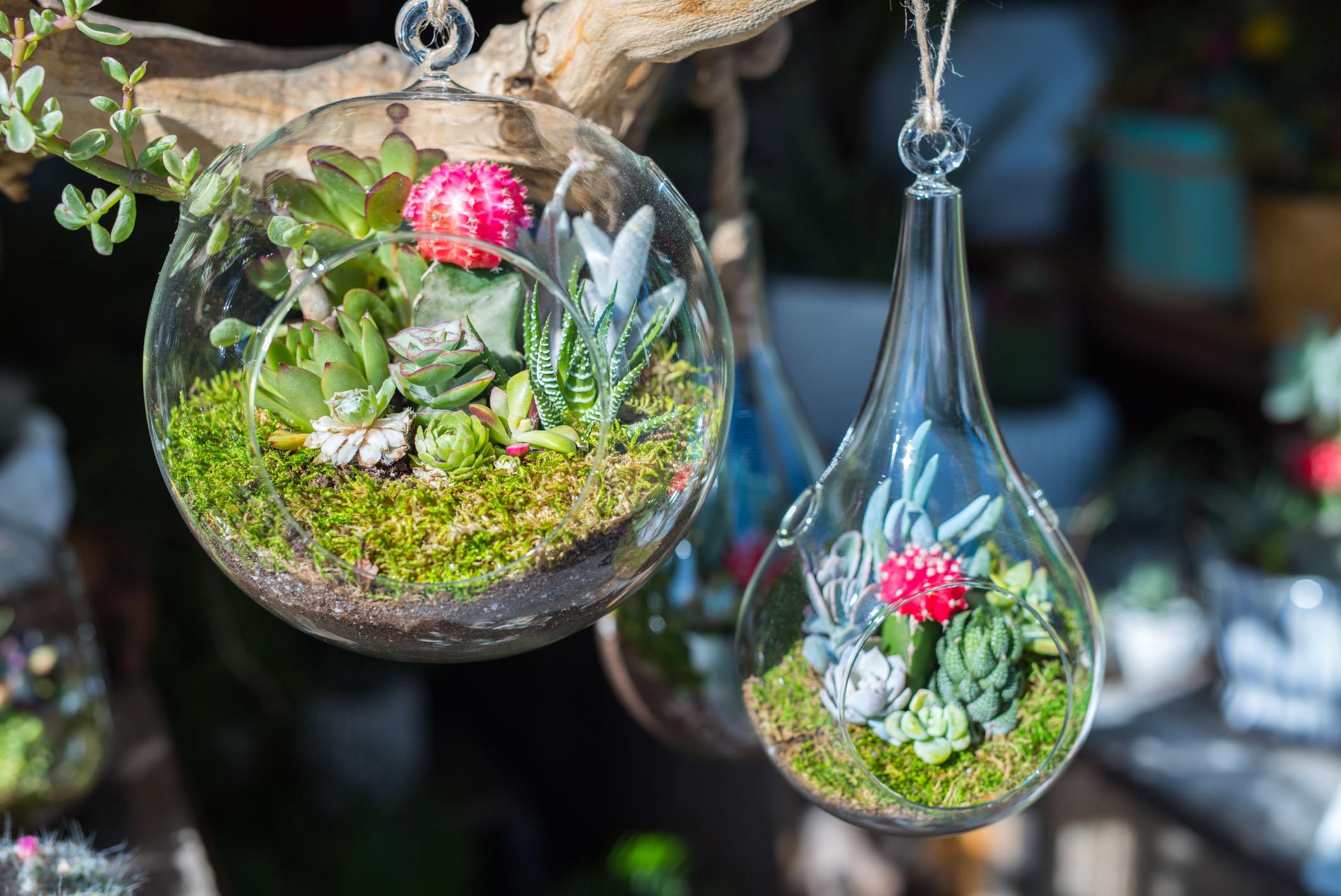 Флорариум подвесной открытый
