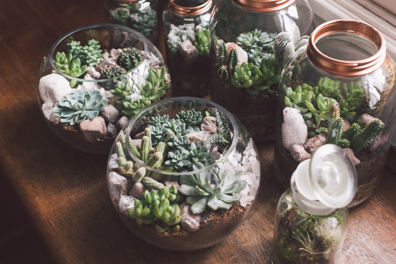 Флорариум: особенности создания мини-сада за стеклом (62 фото)