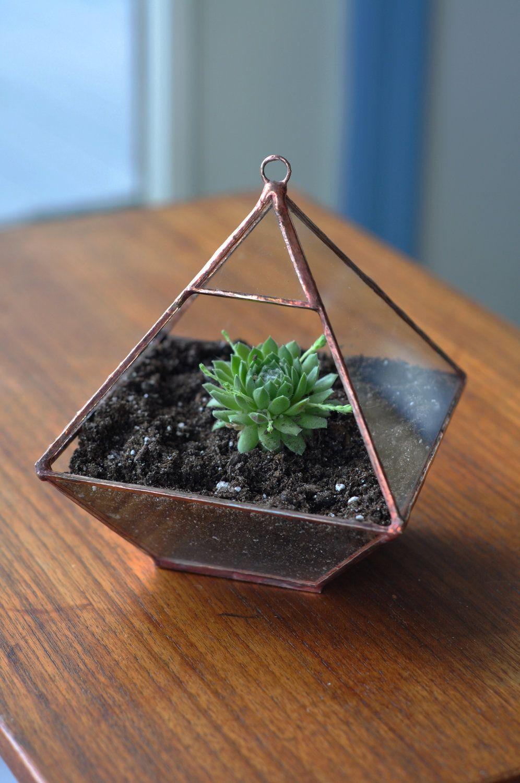 Флорариум треугольный